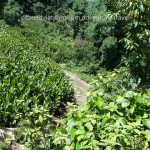 Mai Chau dirt road motorbike tours