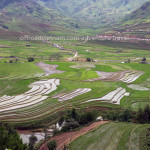 North Vietnam terrace rice fields